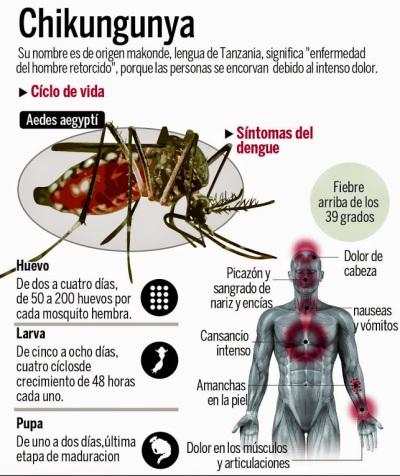 chikungunya1
